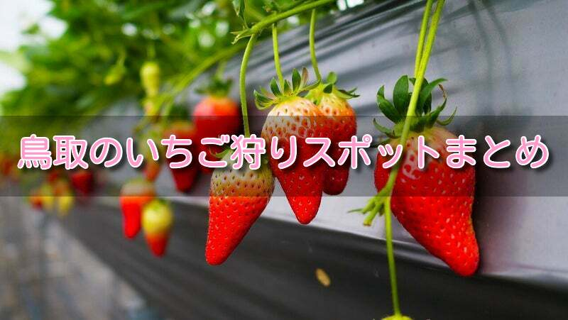 狩り 米子 いちご 【鳥取】米子のおすすめランチ:絶対に行きたいおすすめのランチの店20選